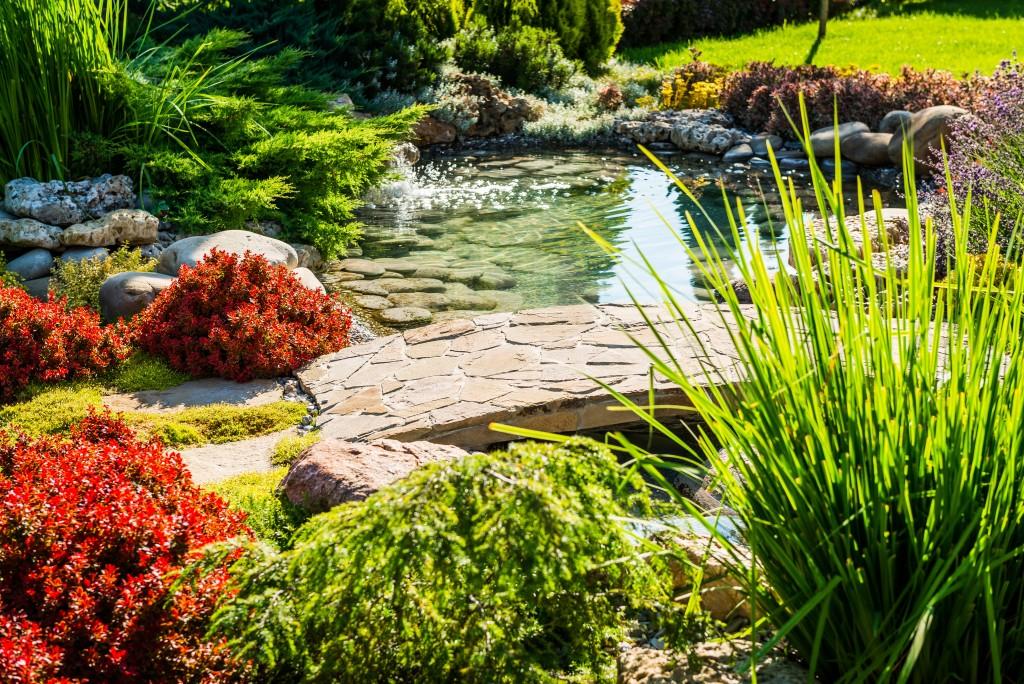 garden with mini pond