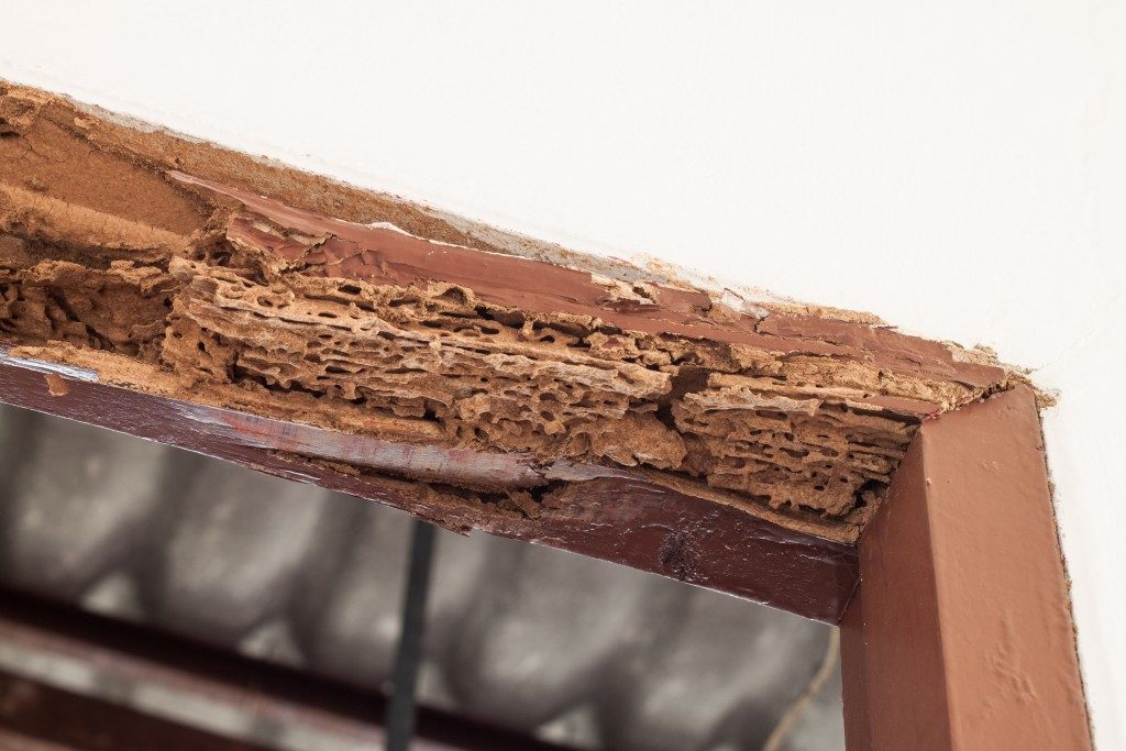 Wood infested with termites