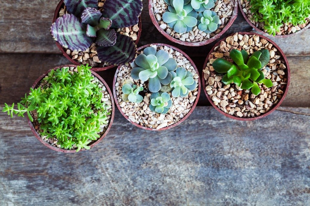 different succulents and cacti in pots