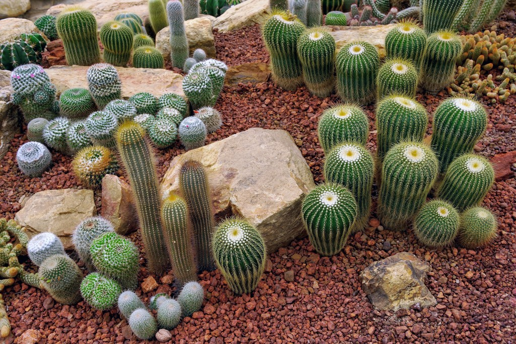 Cactus and rocks in the desert