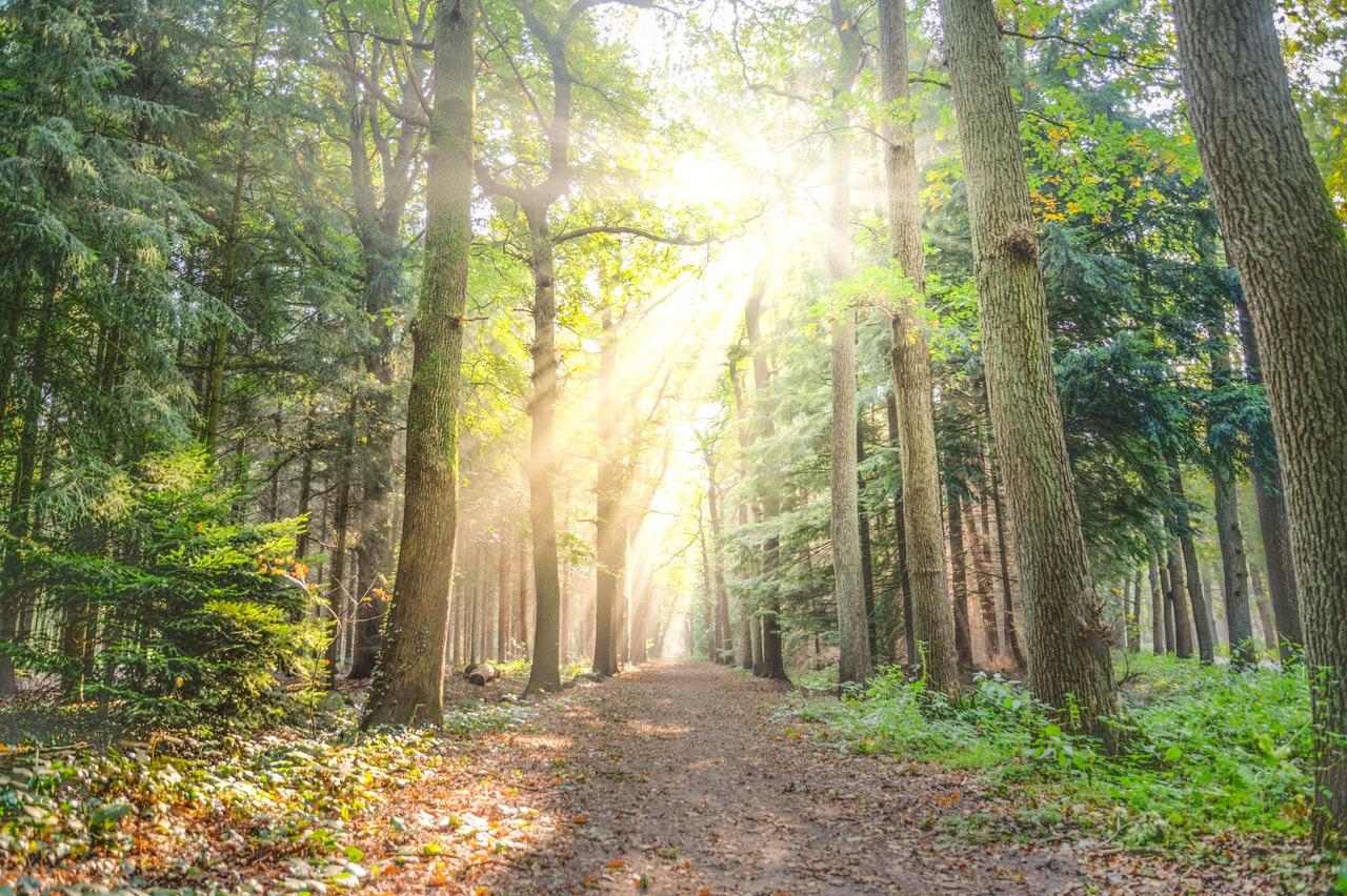 sunshine woods